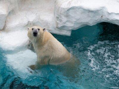 Наклейка Северный полярный медведь