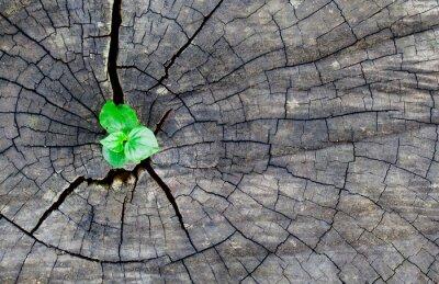 Наклейка старое дерево