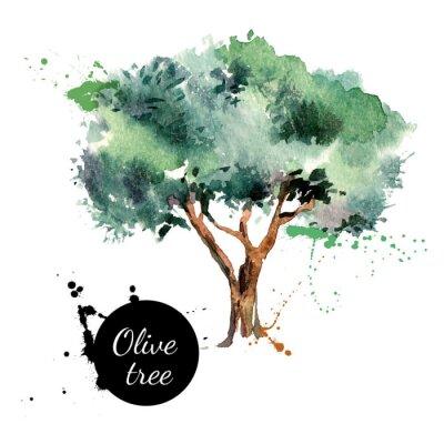 Наклейка Оливковое дерево векторные иллюстрации. Ручной обращается акварель