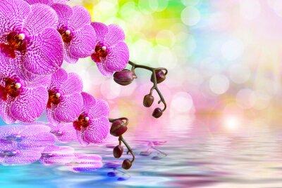 Наклейка Цветок орхидеи крупным планом