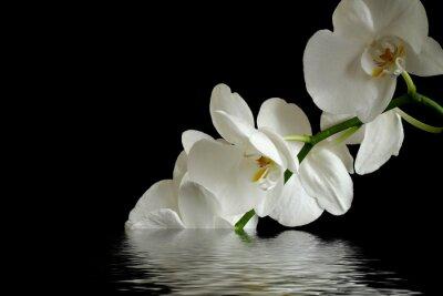 Наклейка orchid flower reflexion