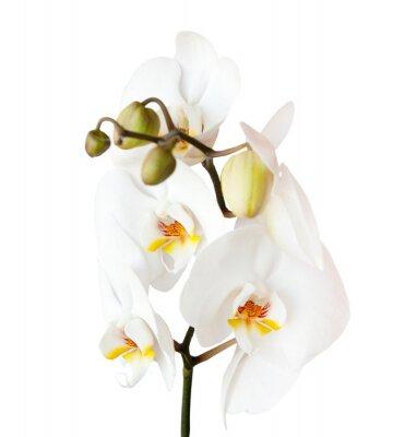 Наклейка орхидеи, изолированных на белом фоне