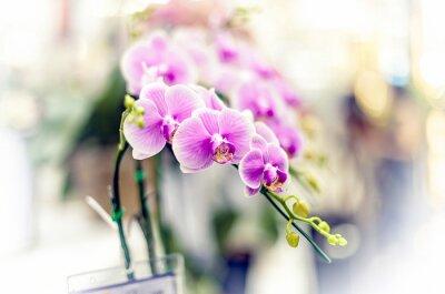Наклейка Орхидеи