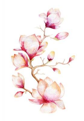 Наклейка Картина цветок магнолии обои. Ручной обращается цветочные Акварель