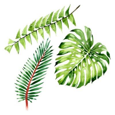 Наклейка Palm beach tree leaves jungle botanical. Watercolor background illustration set. Isolated leaf illustration element.