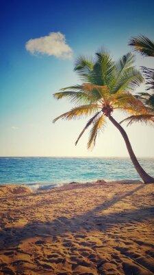 Наклейка Пальма на тропическом острове