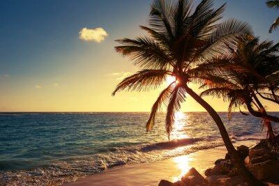 Наклейка Пальма на тропическом пляже