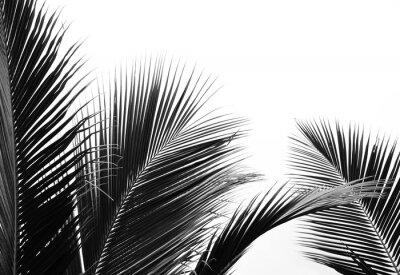 Наклейка palms leaf on white background