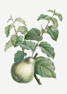 Наклейка Pear on a branch