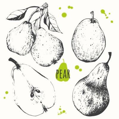 Наклейка Груша. Набор рисованной груши. Свежие органические продукты питания.