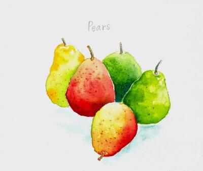 Наклейка pears'watercolor painted
