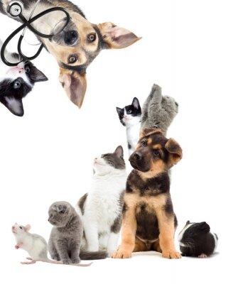 Наклейка Домашние животные ищут