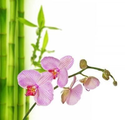 Наклейка розовых орхидей и бамбука - спа фон