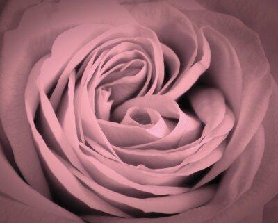 Наклейка Розовые розы крупным планом фон. Романтическая любовь открытка