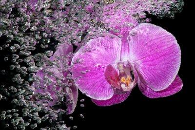 Наклейка Розовый тропический орхидеи под водой