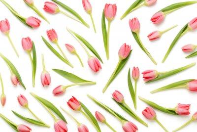 Наклейка Розовая картина тюльпана на белом bacjkground.