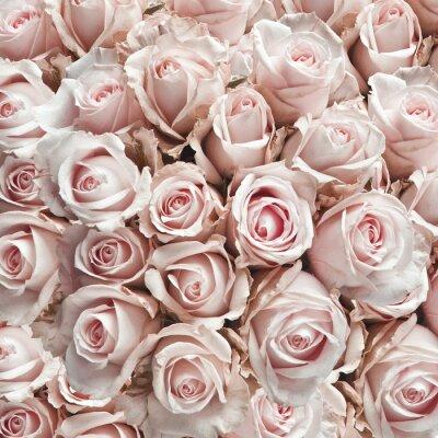 Наклейка Розовые розы старинные