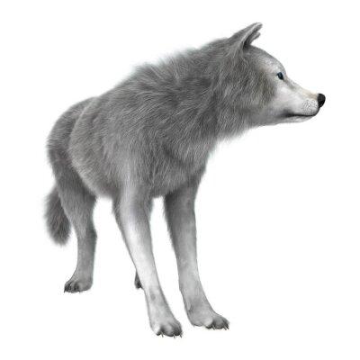Наклейка Полярный волк на белом