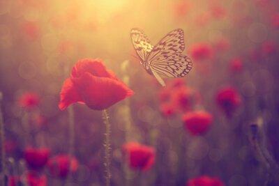 Наклейка Мак и бабочка