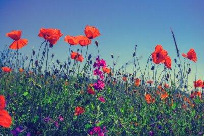 Наклейка Мака цветы на фоне неба