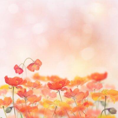 Наклейка Мак Цветы Цветок