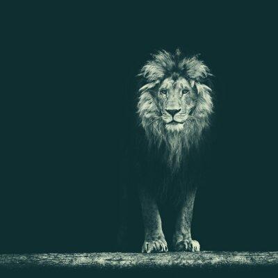 Наклейка Портрет красивый лев, лев в темноте