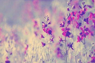Наклейка фиолетовые полевые цветы