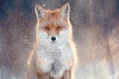 Наклейка красная лисица в зимнем лесу Довольно