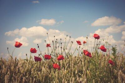 Наклейка Красные маки в поле пшеницы