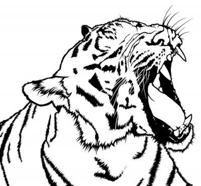 Наклейка Ревущие Тигр - черно-белый рисунок иллюстрации, вектор