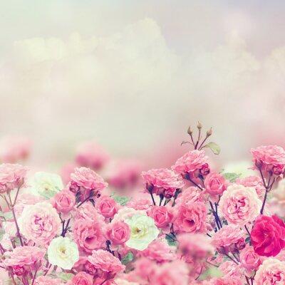 Наклейка Роза Цветы