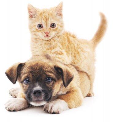 Наклейка Rred котенка в щенка.