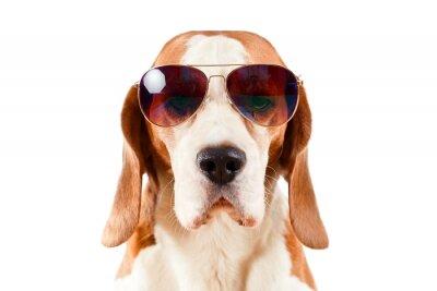 Наклейка sentry dog in sunglasses  on white