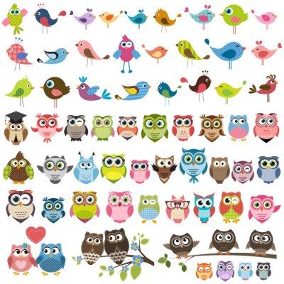 Наклейка Набор мультфильм красочных птиц и сов
