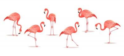 Наклейка Набор экзотических фламинго, изолированных на белом фоне. Ручной обращается акварель иллюстрации.