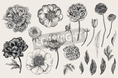 Наклейка Set of Spring flowers. Vintage vector botanical illustration. Black and white