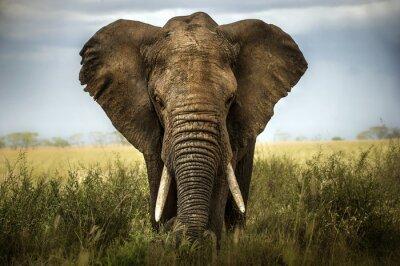 Наклейка Sfondo ди Elefante