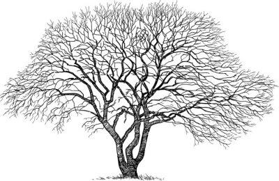 Наклейка силуэт старого дерева