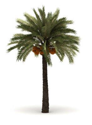 Наклейка Одноместный Palm Tree