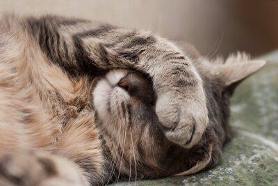 Наклейка Спящий кот