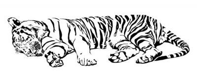 Наклейка Спящая тигр.