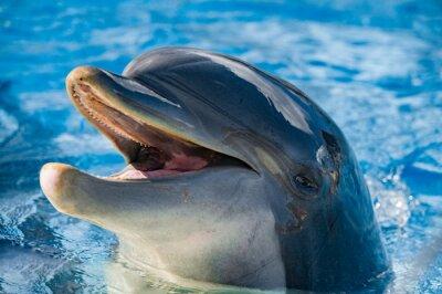 Наклейка улыбка дельфина смотрит на вас