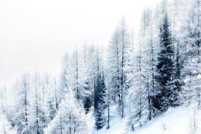 Наклейка Снегом лес