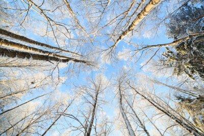 Наклейка Снегом дерево перспективный вид, глядя вверх