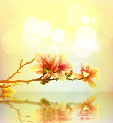 Наклейка Весенний цветок магнолии фон