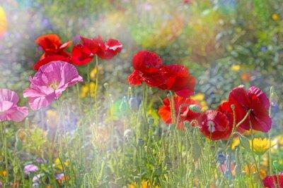 Наклейка весенний луг с красными маками