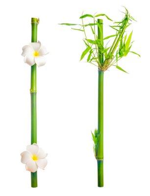 Наклейка stems of bamboo с leaves и frangipani flower is isolated on