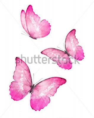 Наклейка Три цветных акварельных бабочек, на белом фоне