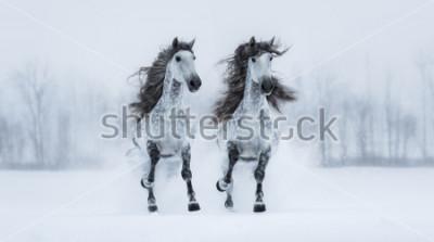Наклейка Две бегущие серые длинноволосые испанские лошади-чистокровные снежные поля.