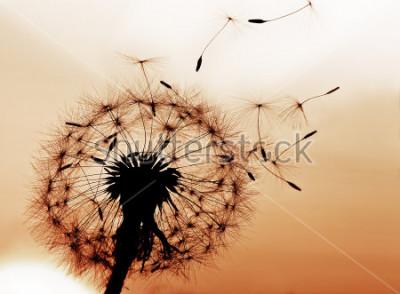 Наклейка Одуванчик дует семена на ветру.